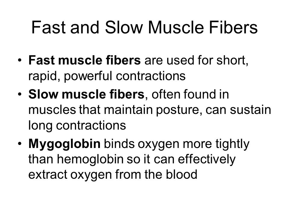 Fast and Slow Muscle Fibers