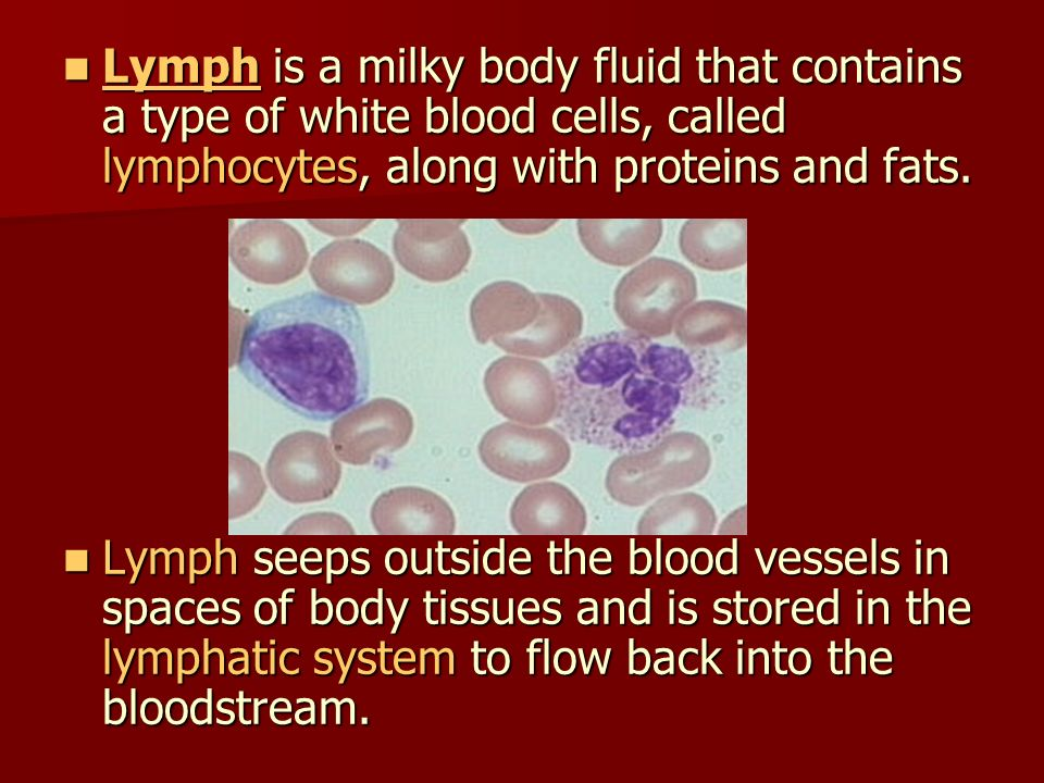 Lymph is a milky body fluid that contains a type of white blood cells, called lymphocytes, along with proteins and fats.
