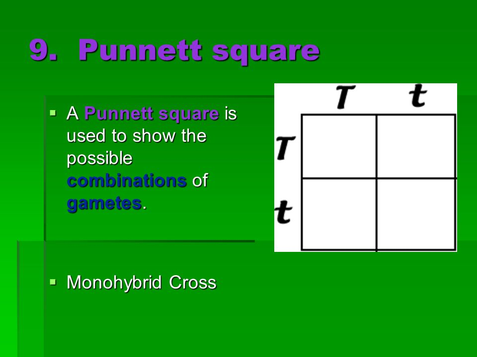 9. Punnett square A Punnett square is used to show the possible combinations of gametes.
