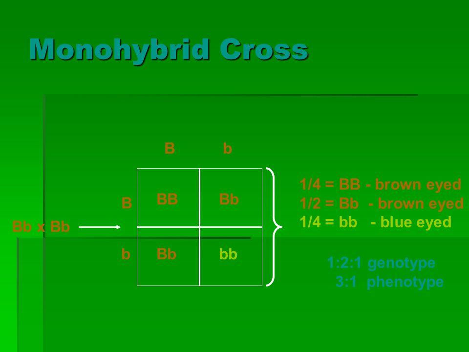 Monohybrid Cross B b Bb x Bb 1/4 = BB - brown eyed