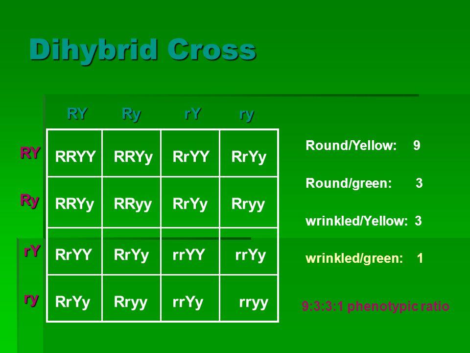 Dihybrid Cross RY Ry rY ry RRYY RRYy RrYY RrYy RRyy Rryy rrYY rrYy
