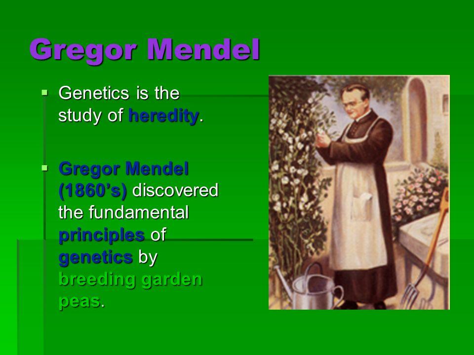 Gregor Mendel Genetics is the study of heredity.
