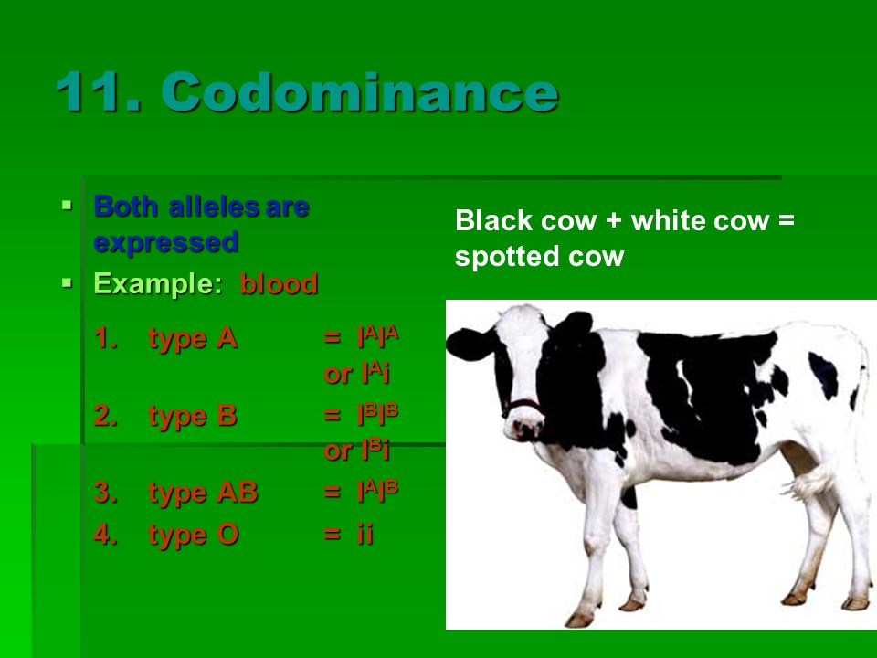 11. Codominance Both alleles are expressed