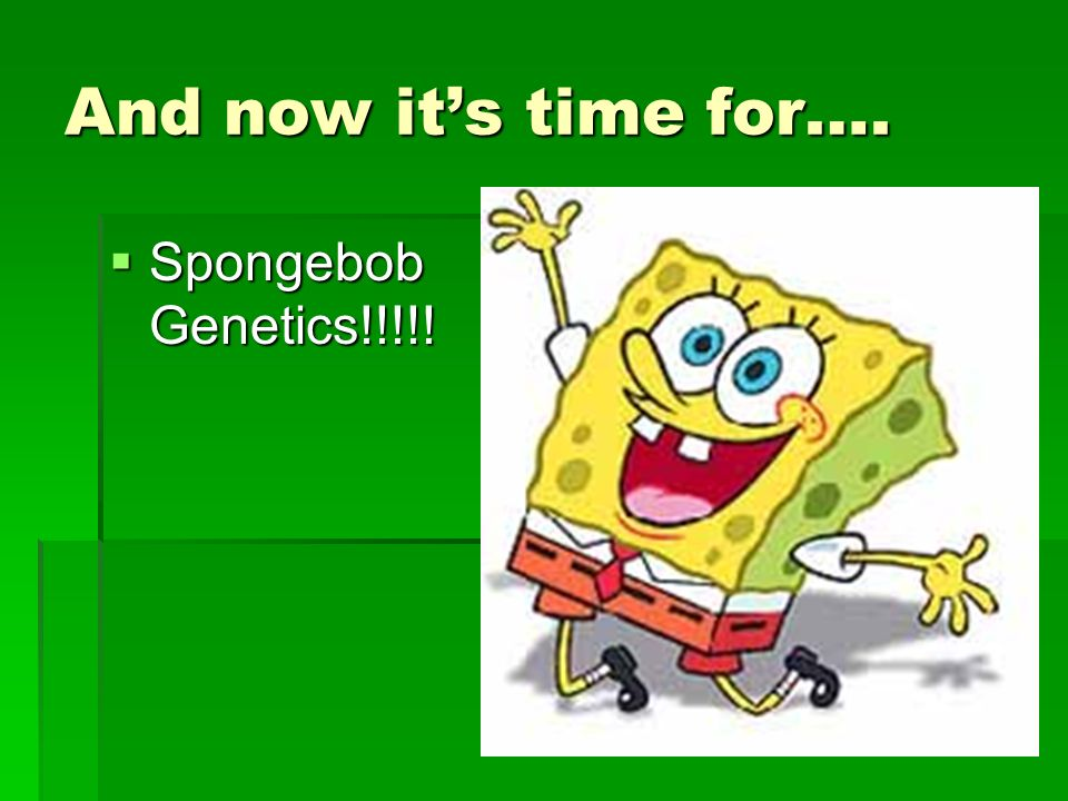 And now it's time for…. Spongebob Genetics!!!!!