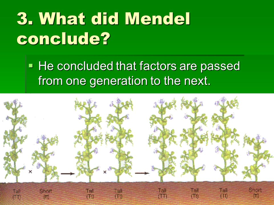 3. What did Mendel conclude