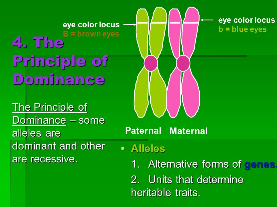 4. The Principle of Dominance