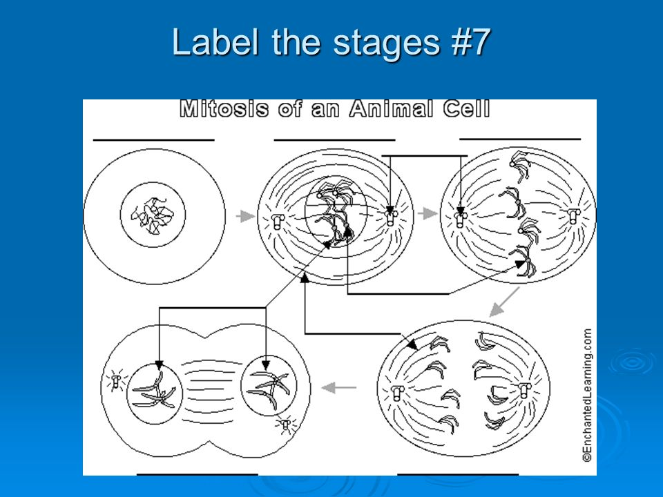Label the stages #7