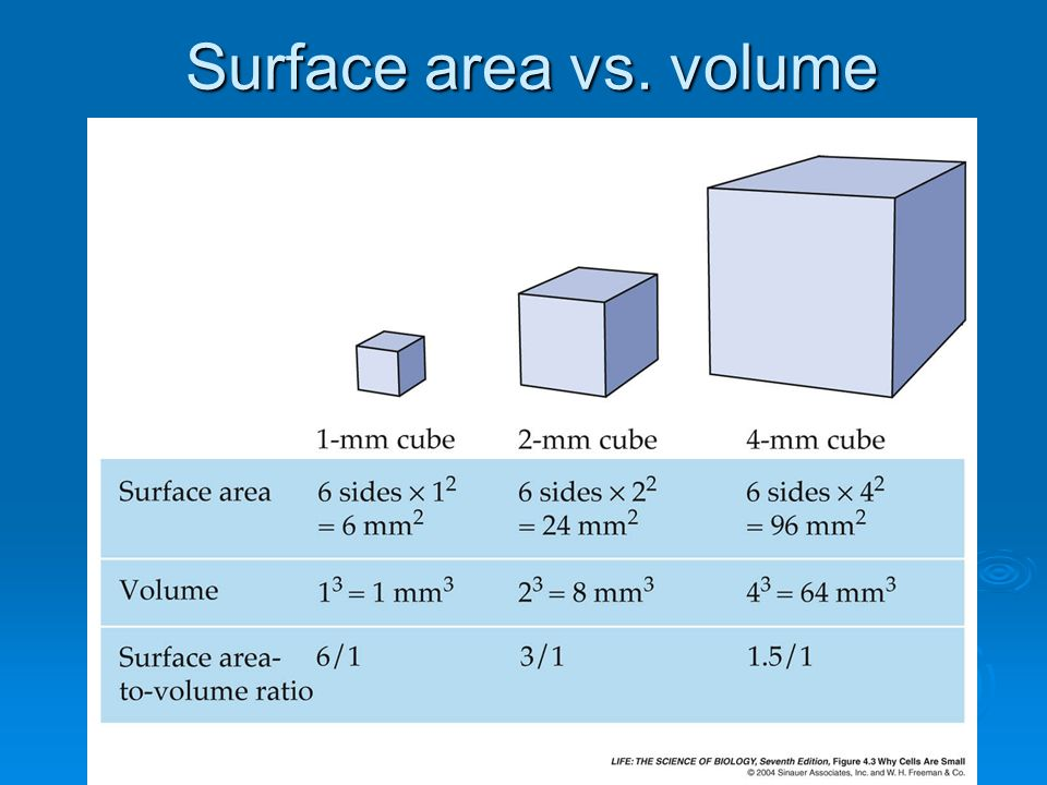 Surface area vs. volume