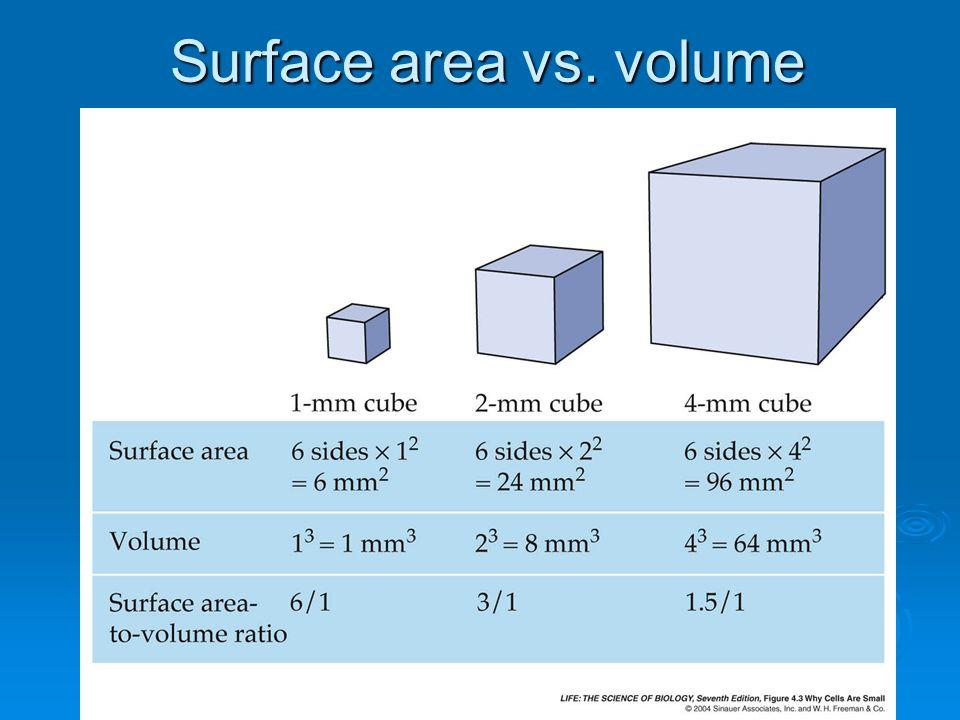 Surface area vs. volume