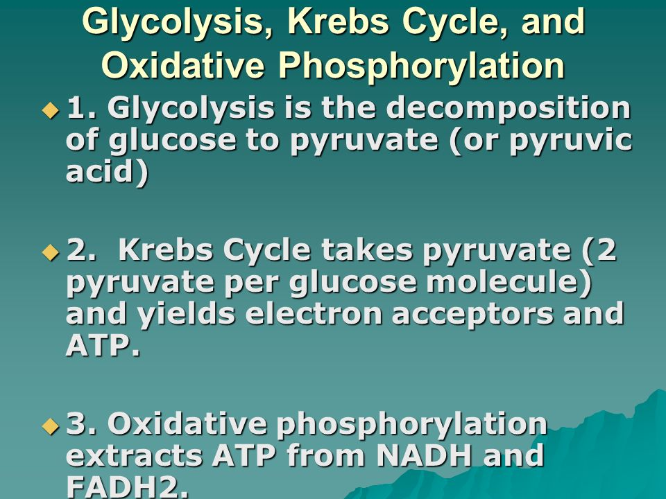 Glycolysis, Krebs Cycle, and Oxidative Phosphorylation