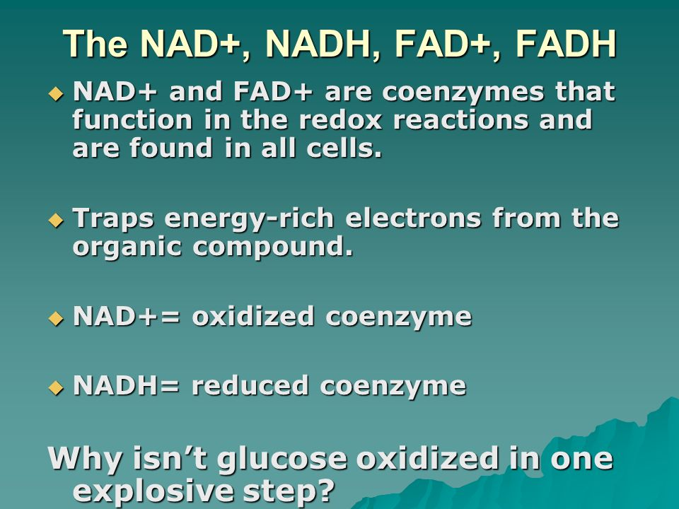 The NAD+, NADH, FAD+, FADHNAD+ and FAD+ are coenzymes that function in the redox reactions and are found in all cells.