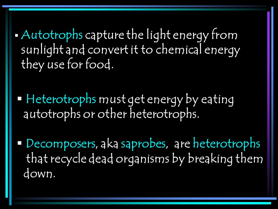 Heterotrophs must get energy by eating