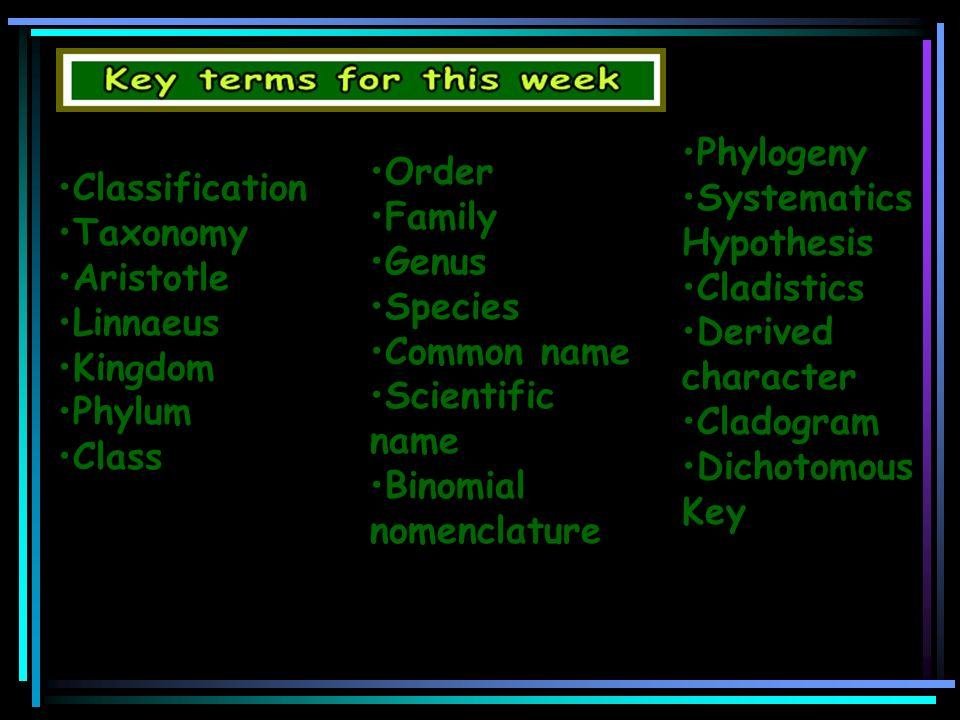 Phylogeny Systematics Hypothesis. Cladistics. Derived character. Cladogram. Dichotomous Key. Order.