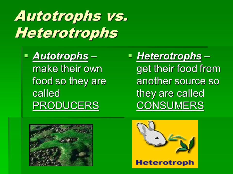 autotroph and heterotroph relationship help