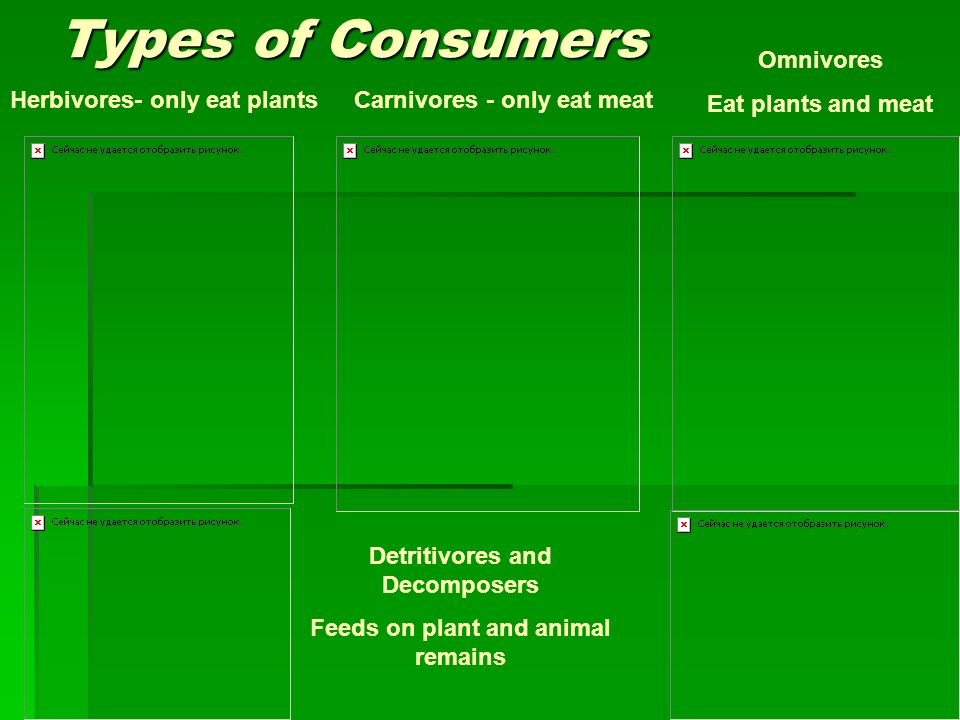 Detritivores and Decomposers Feeds on plant and animal remains
