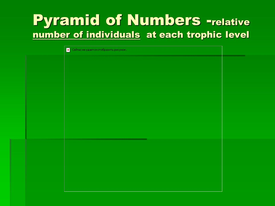 Pyramid of Numbers -relative number of individuals at each trophic level