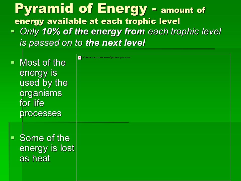 Pyramid of Energy - amount of energy available at each trophic level