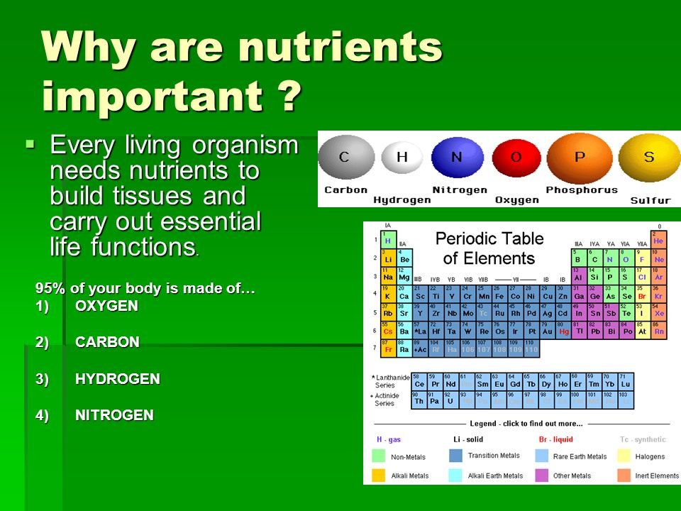 Why are nutrients important