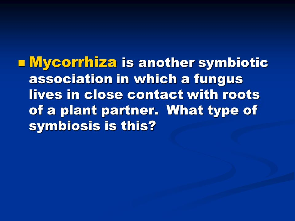 Mycorrhiza is another symbiotic association in which a fungus lives in close contact with roots of a plant partner.