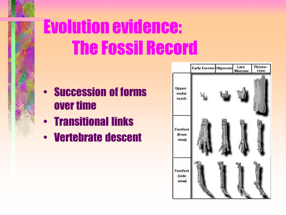 Evolution evidence: The Fossil Record
