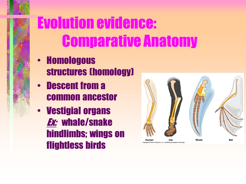 Evolution evidence: Comparative Anatomy
