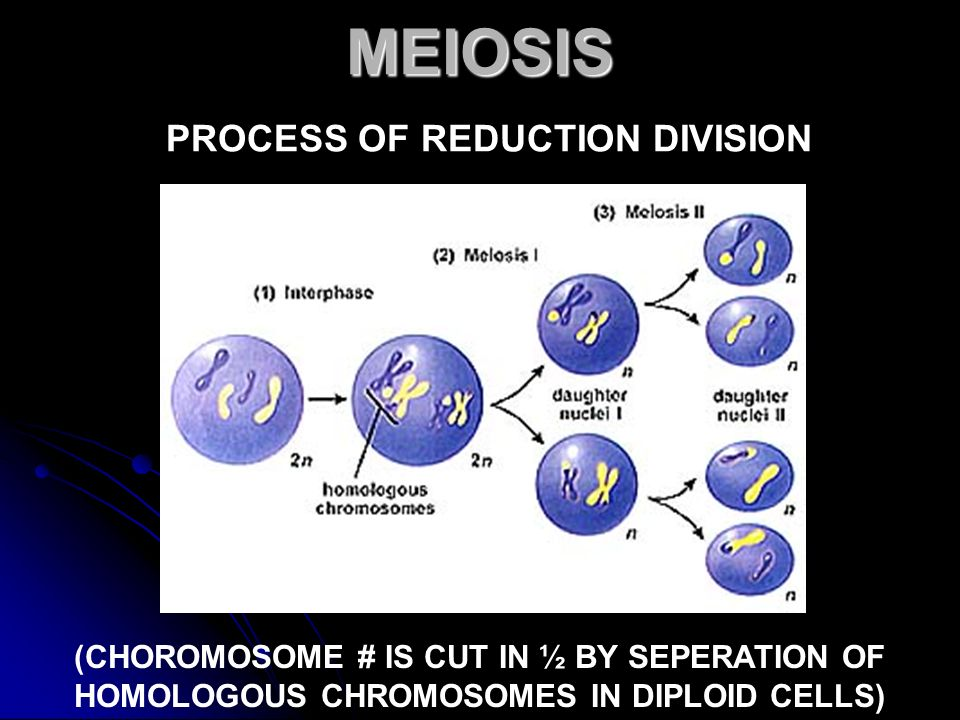 MEIOSIS PROCESS OF REDUCTION DIVISION