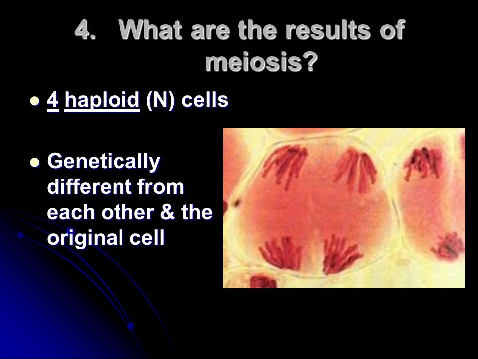 What are the results of meiosis