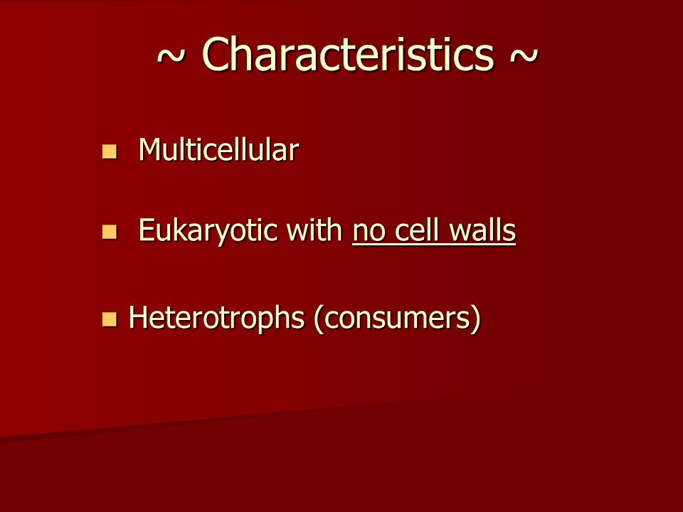 Multicellular Eukaryotic with no cell walls Heterotrophs (consumers)