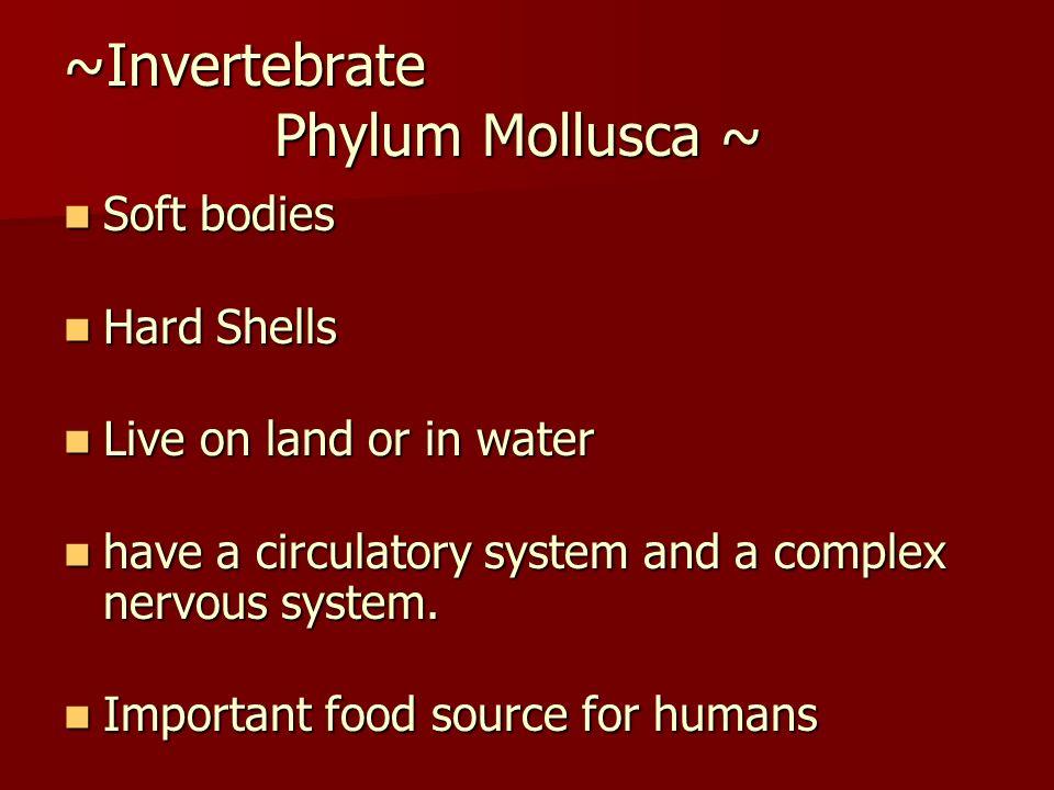 ~Invertebrate Phylum Mollusca ~