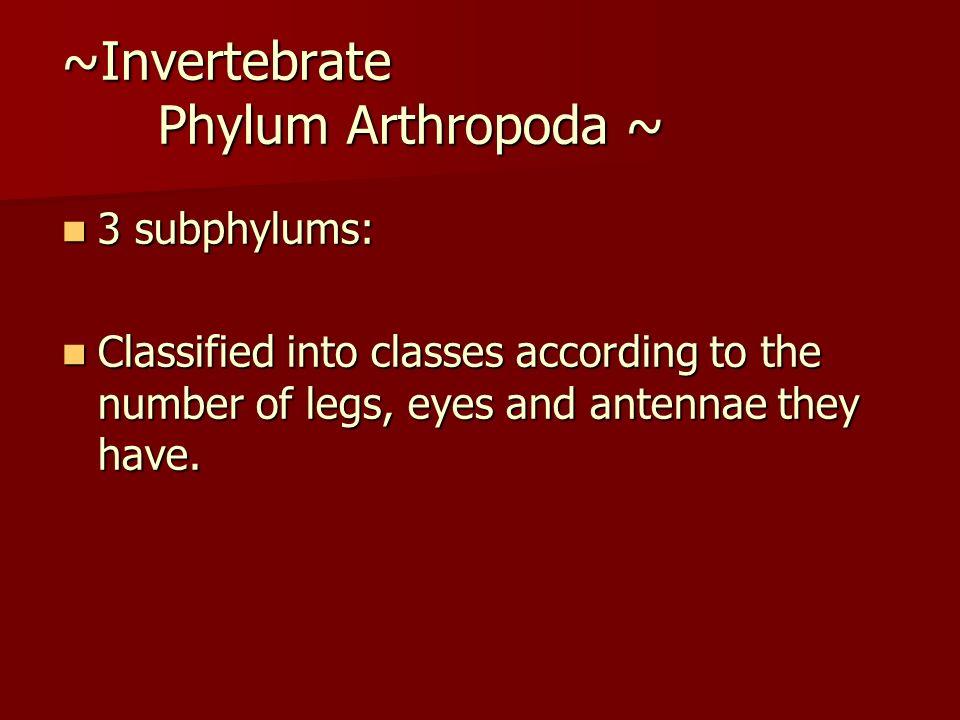 ~Invertebrate Phylum Arthropoda ~