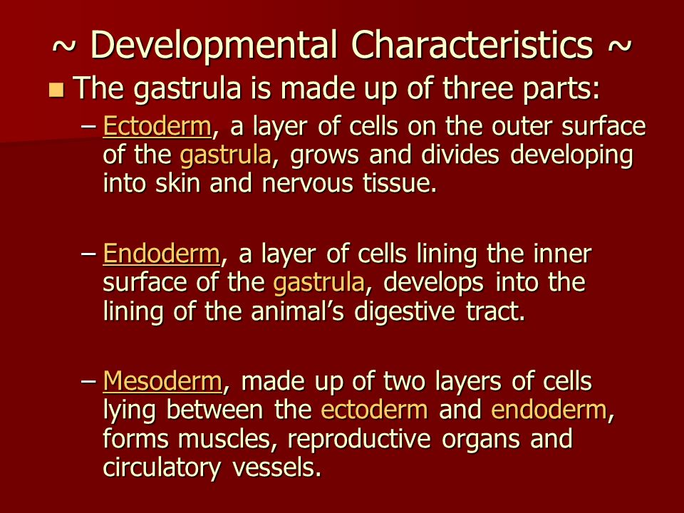 ~ Developmental Characteristics ~