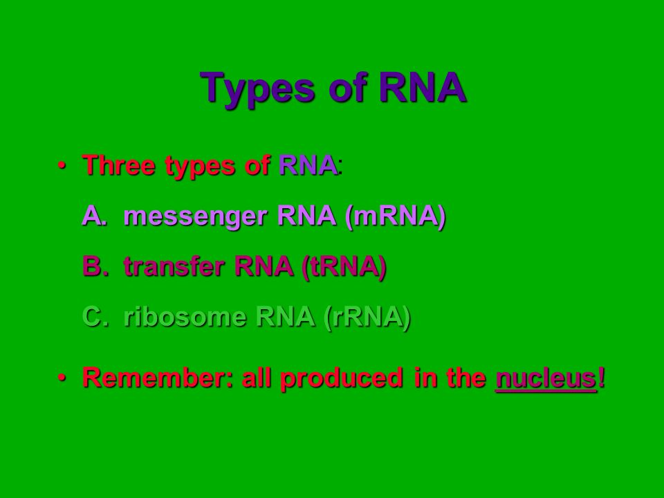 Types of RNA Three types of RNA: A. messenger RNA (mRNA)