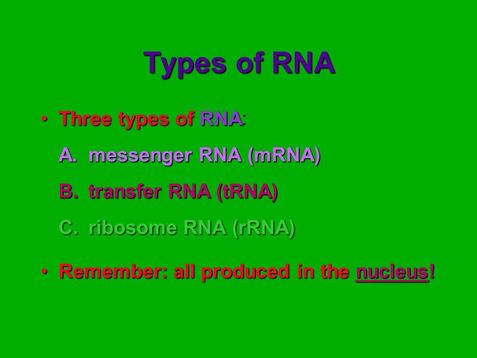 Types of RNA Three types of RNA: A. messenger RNA (mRNA)