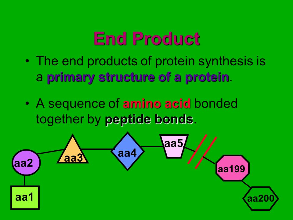 End ProductThe end products of protein synthesis is a primary structure of a protein. A sequence of amino acid bonded together by peptide bonds.