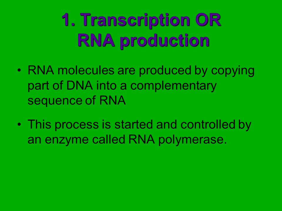 1. Transcription OR RNA production
