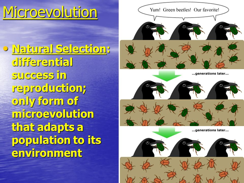 Microevolution Natural Selection: differential success in reproduction; only form of microevolution that adapts a population to its environment.