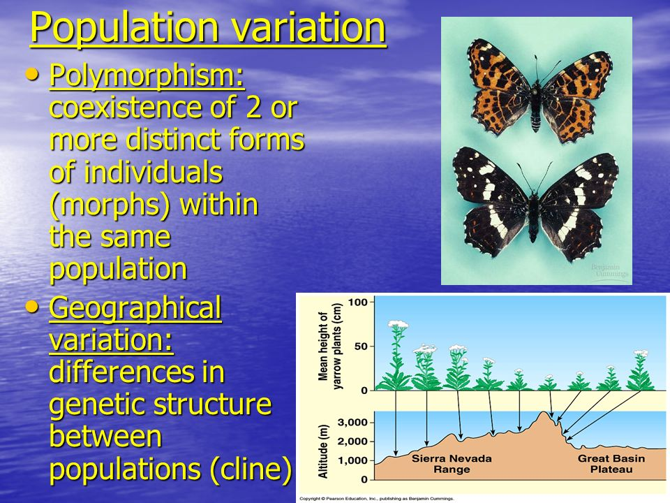 Population variationPolymorphism: coexistence of 2 or more distinct forms of individuals (morphs) within the same population.