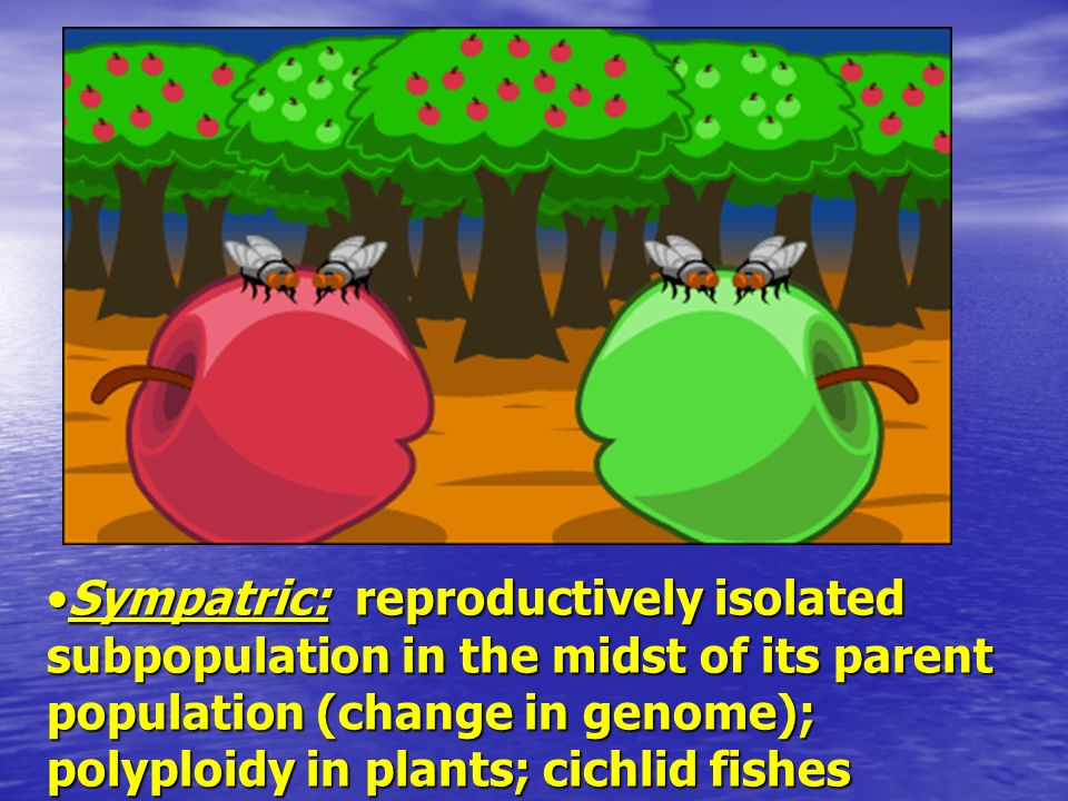 Sympatric: reproductively isolated subpopulation in the midst of its parent population (change in genome); polyploidy in plants; cichlid fishes