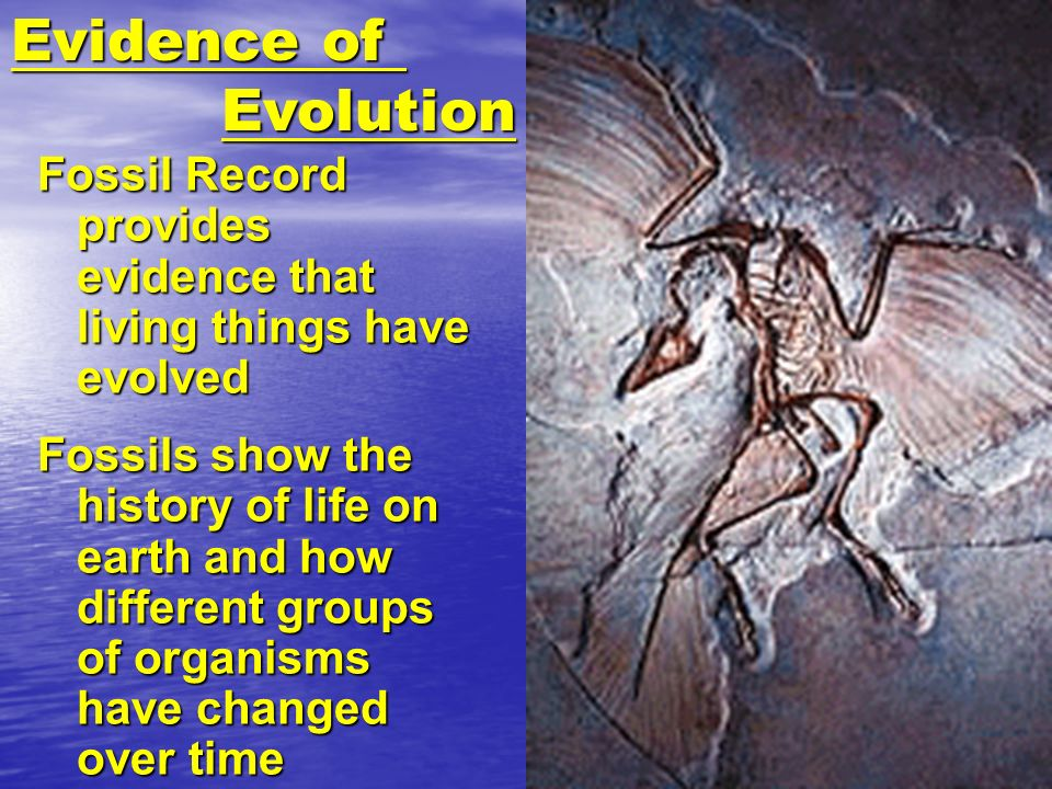 Evidence ofEvolution. Fossil Record provides evidence that living things have evolved.