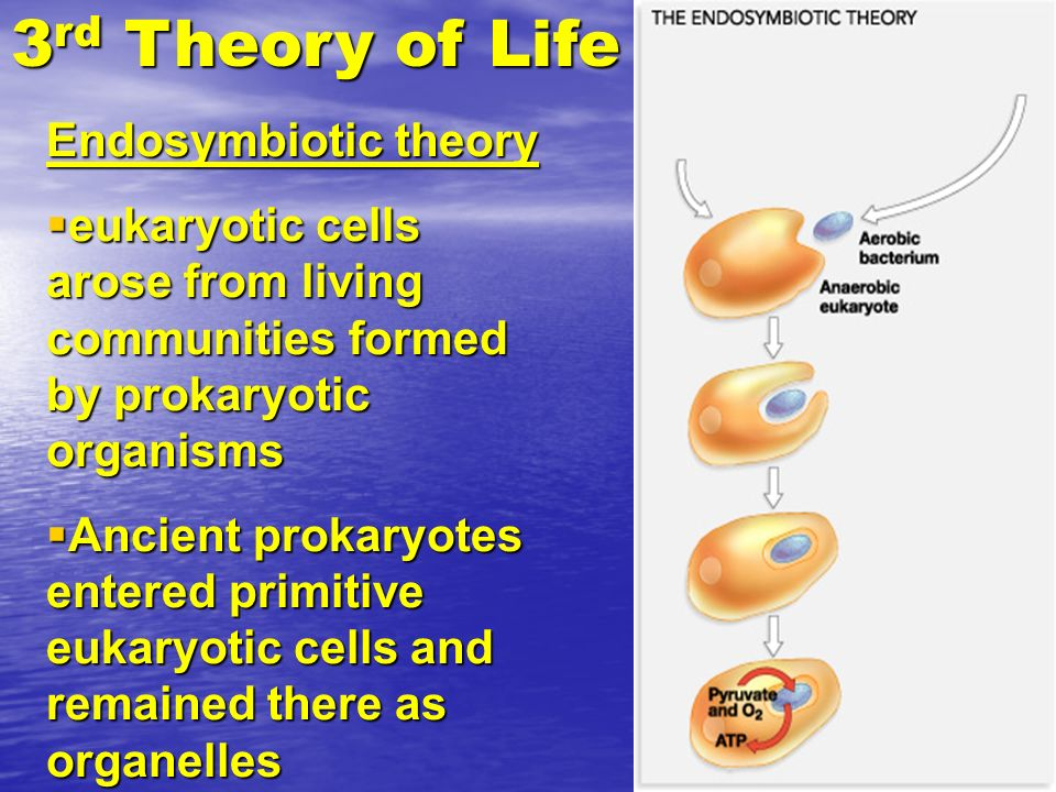 3rd Theory of Life Endosymbiotic theory