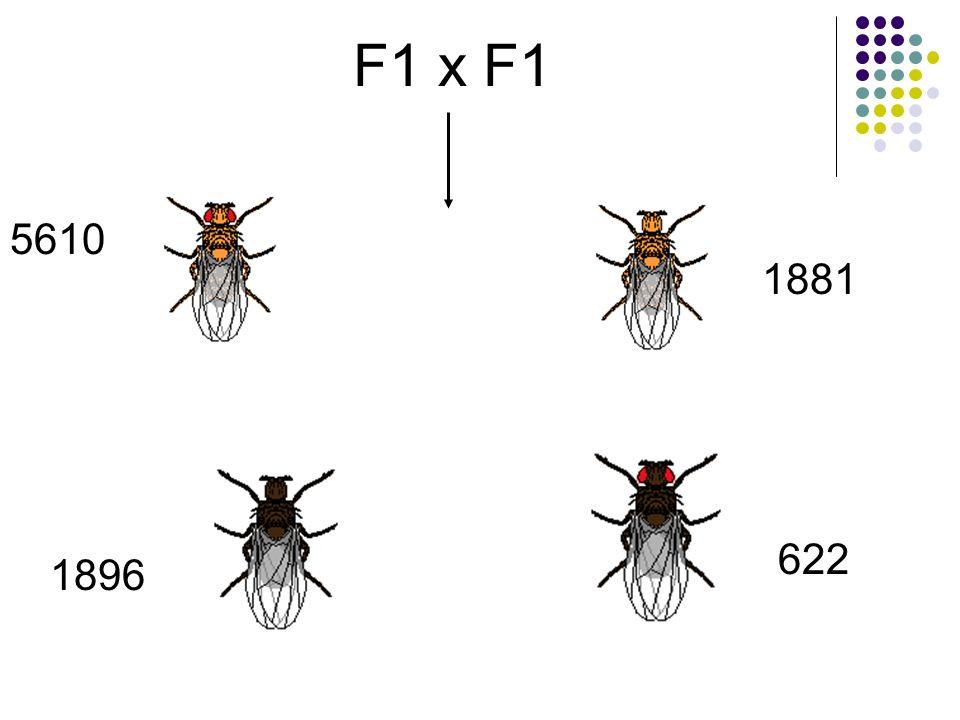 F1 x F1 5610 1881 622 1896