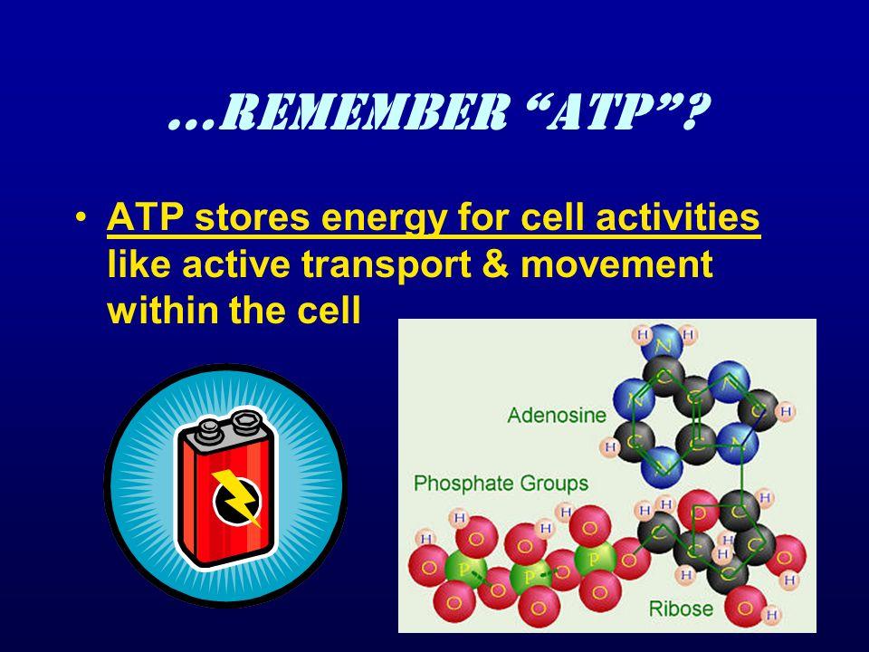 …Remember ATP .