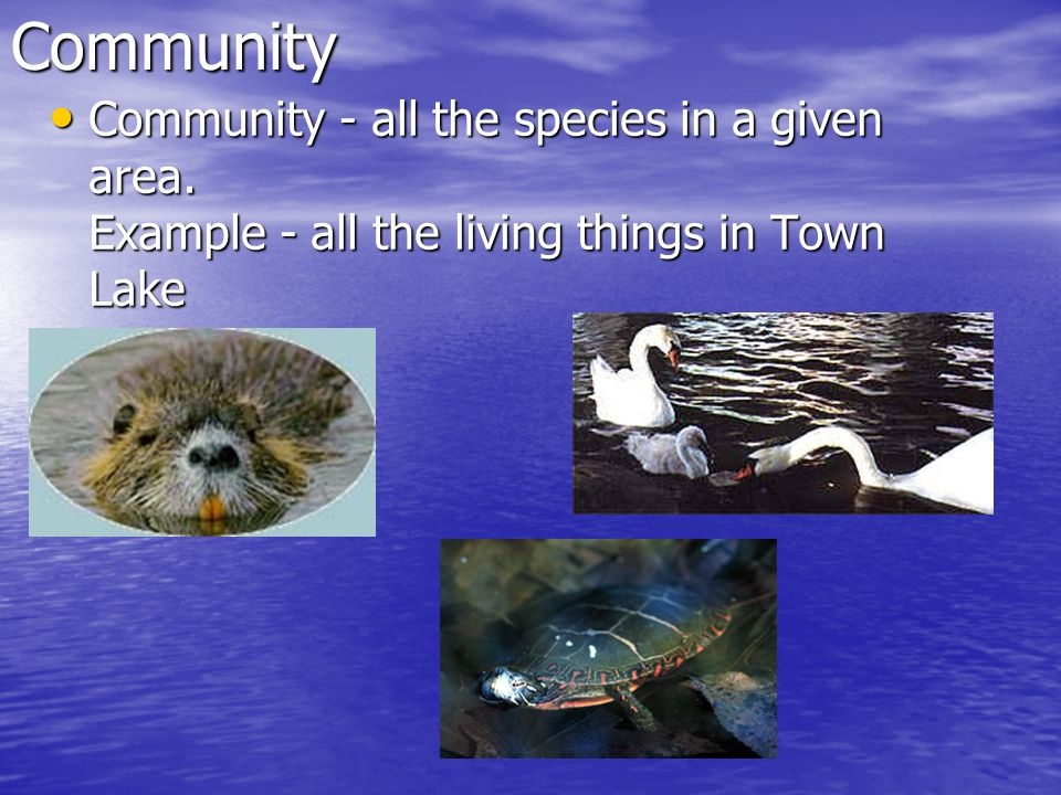 Community Community - all the species in a given area.