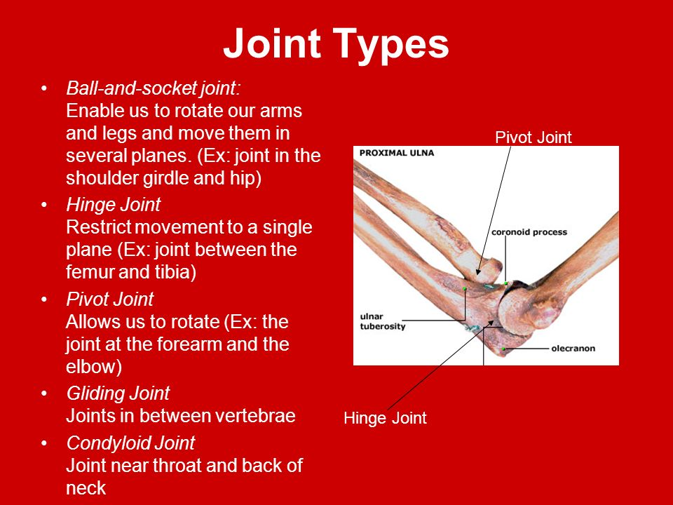 Joint Types Ball-and-socket joint: Enable us to rotate our arms and legs and move them in several planes. (Ex: joint in the shoulder girdle and hip)