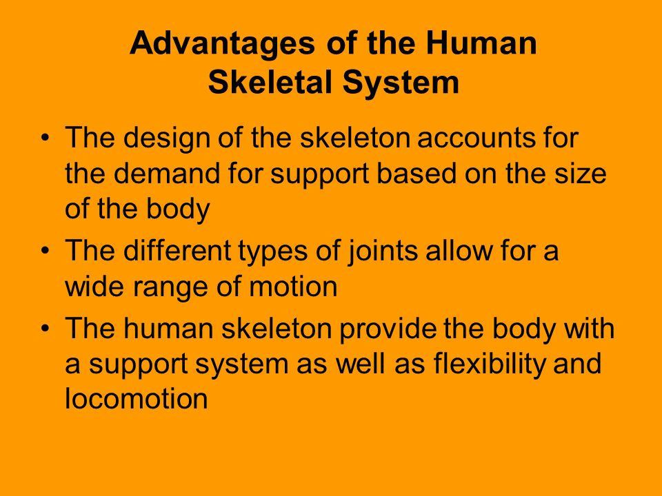 Advantages of the Human Skeletal System