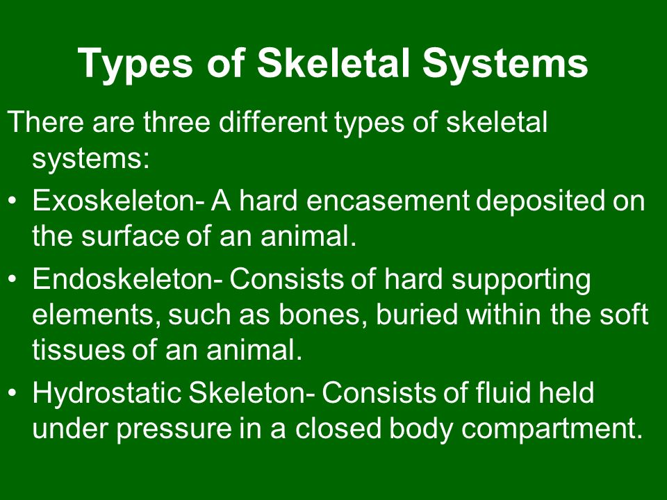 Types of Skeletal Systems