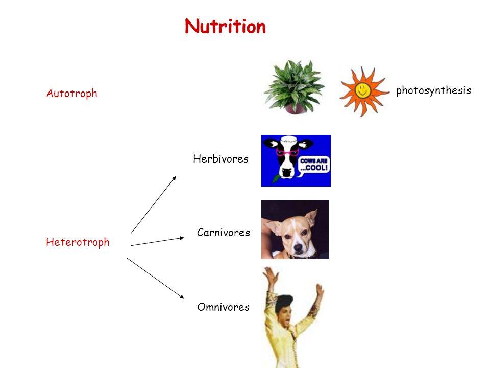 Nutrition photosynthesis Autotroph Herbivores Carnivores Heterotroph