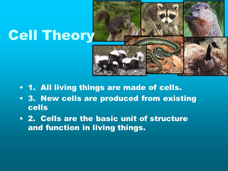 Cell Theory 1. All living things are made of cells.