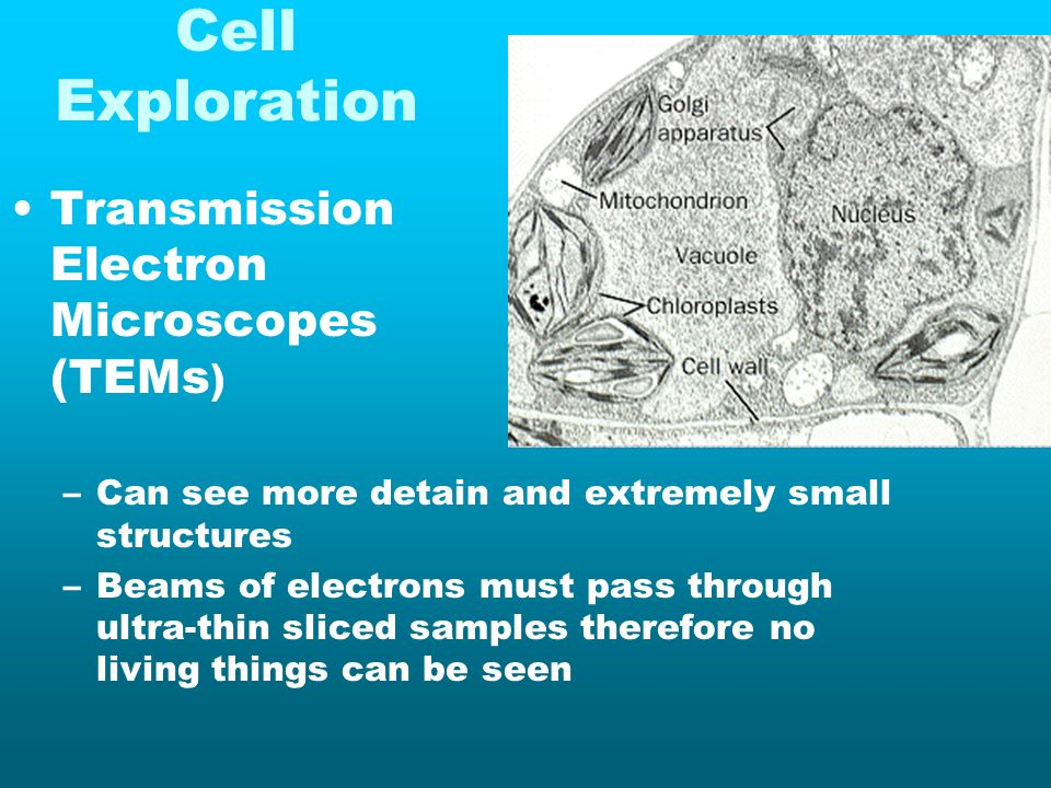 Cell Exploration Transmission Electron Microscopes (TEMs)