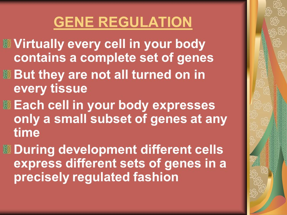 GENE REGULATIONVirtually every cell in your body contains a complete set of genes. But they are not all turned on in every tissue.